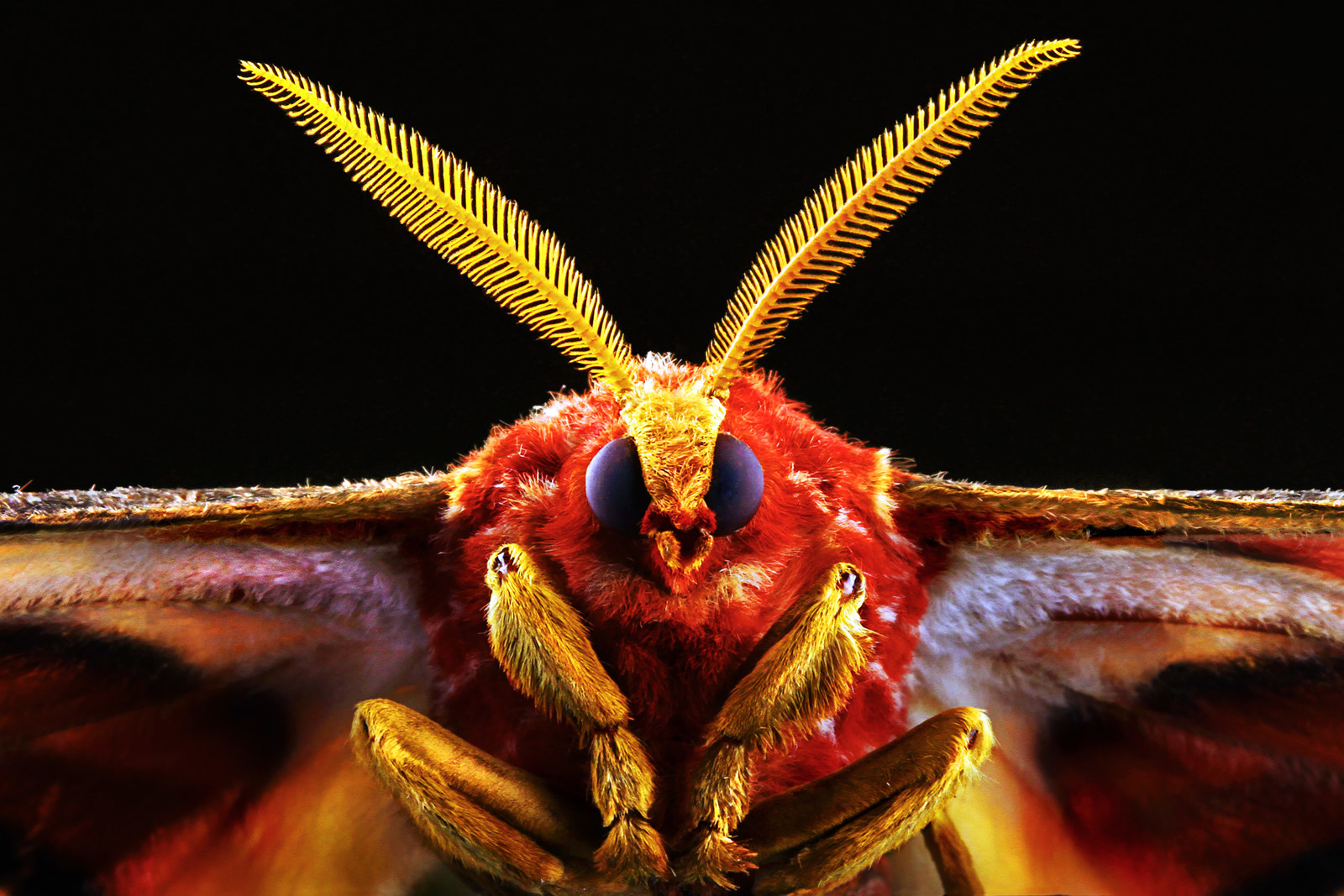 Turns Out, Moths Are Hella Cute Up Close