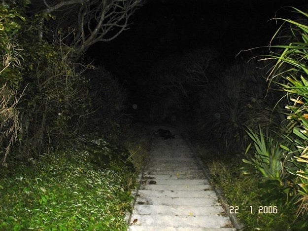 Or having to go down these steps, each step bringing you closer into total darkness: