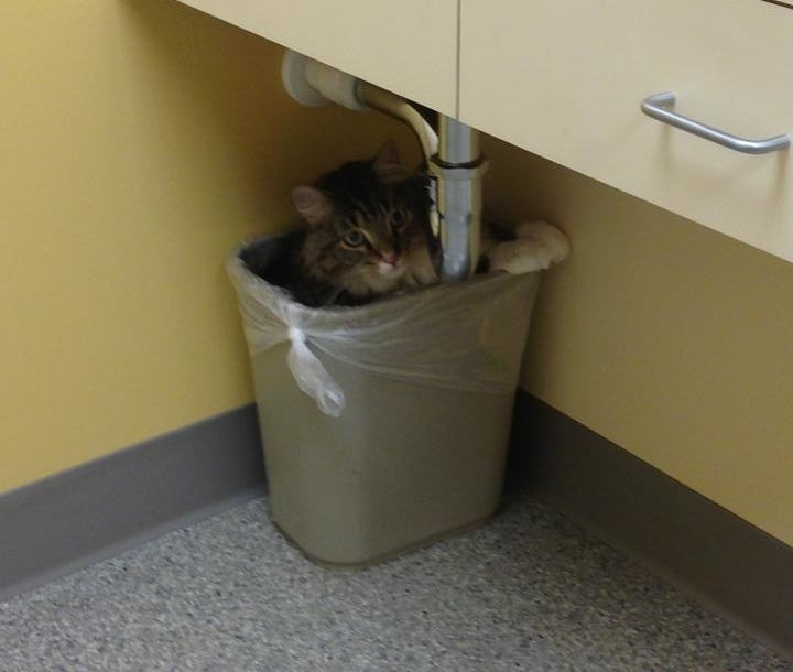 """I'll hide in here, and once they take out the garbage, I can make a break for it."""