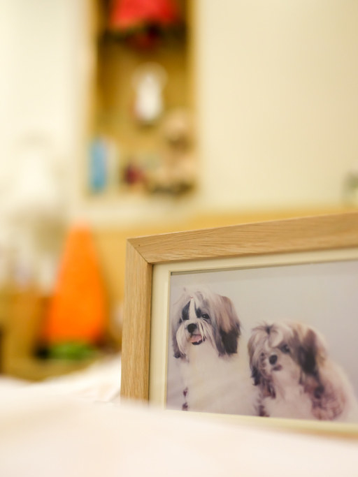 A professionally shot and framed picture of their dog who was still alive.