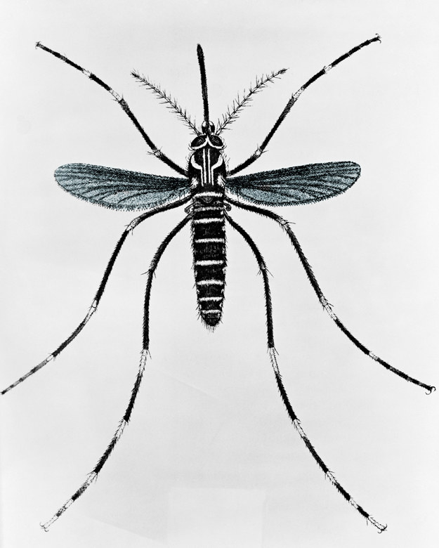 The animal that kills the most people every year isn't snakes, sharks, or even other humans — it's the mosquito.