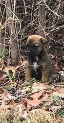 """""""This little brown puppy was just sitting on the curb near the woods,"""" he recalled. """"She ran back into the weeds, so I pulled over, got out, and followed her. That's when I found the other two."""""""