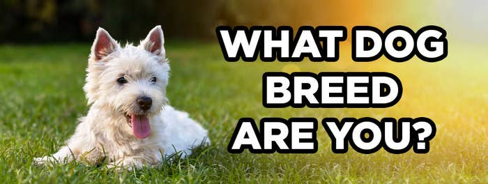Take This Quiz And We'll Tell You What Your Spirit Dog Breed Is