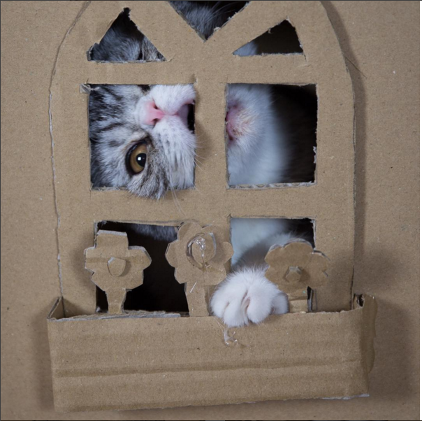 But guess how long the kitty played within the walls of elaborate cardboard?