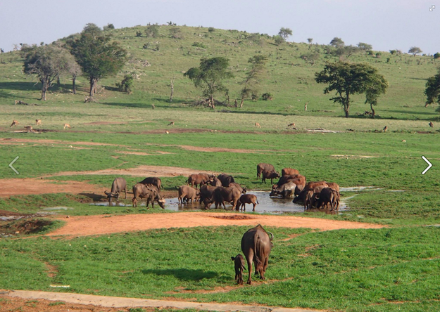 Mwalua's water truck brings the elephants, buffalo, antelope and zebras running to waterholes.