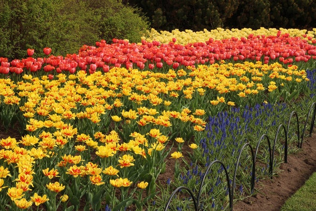 It certainly doesn't fill up with thousands of tulips every spring.