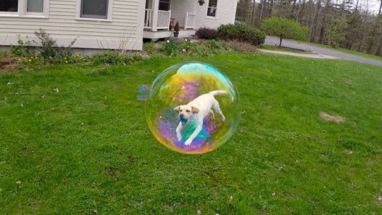 La del perrito que se metió en una burbuja, aunque fuera solo por un segundo.