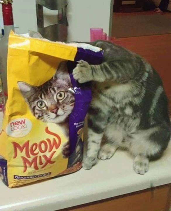 Bien dicen que la curiosidad mató al gato.