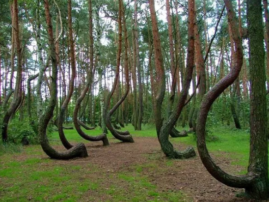 "And on Poland there's the ""Crooked Forest,"" where you know shit has gone down:"