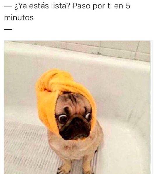 Que Risa Harán Te Derramar Lágrimas De Perros 28 Memes CodxeB