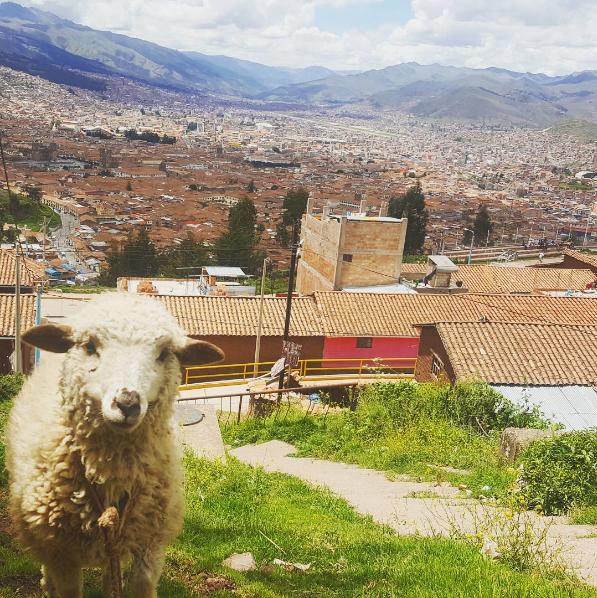 'Eu morei sozinha seis meses em Cuzco, no Peru, quando tinha 22 anos. A cidade é segura e tem um custo de vida baixo. É um lugar muito turístico (alguém conhece Machu Picchu?), portanto, se você não souber falar espanhol, muitos habitantes sabem falar inglês. A cidade é bela, o clima é bom, a vida noturna é tão boa quando nos Estados Unidos, a comida é uma das melhores do mundo... não consigo dizer nada de ruim sobre o lugar. É uma cidade perfeita para jovens com vinte e poucos anos irem quando não forem mais adolescentes, mas também não estiverem totalmente prontos para a vida adulta.'—Katelyn Özdemir, Facebook