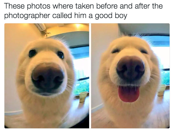 sub buzz 27745 1490094101 3?downsize=715 *&output format=auto&output quality=auto 100 dog memes that will keep you laughing for hours,Dog Funny Meme