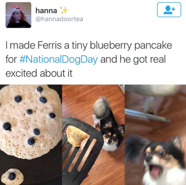 This dog freaking out about his pancake.