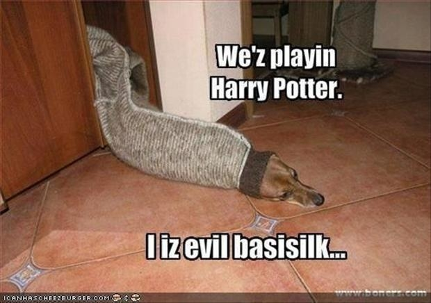 Funny Memes Clean 2017 : Harry potter memes that will always make you laugh