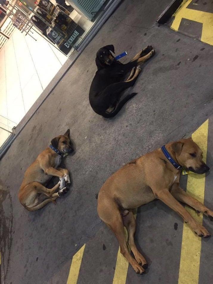 Tudo bem se levarmos em conta que eles diariamente levam uma vida de cão, né?
