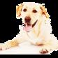 theukdogwhisperer