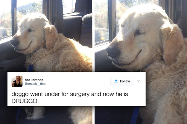 People Are Loving This Dog Who Came Out Of Surgery And Can't Stop Smiling