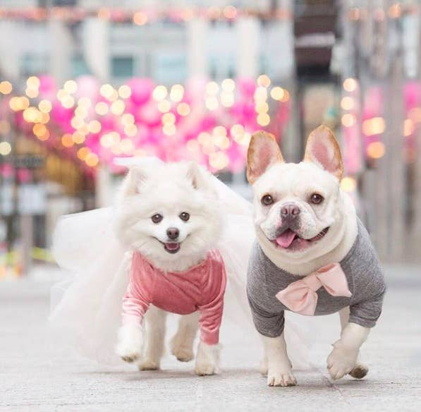 'They are, simply put, fashionistas in love in DC,' Abril added of the pups. 'Luna adores Sebastian completely even when he sometimes doesn't return the affection. He also is very much her protector and will push other dogs out of her way if they get to close to her.'