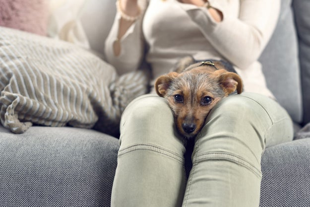 As 10 profissões do seu cachorro