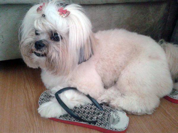 Impulsionador da indústria de calçados.
