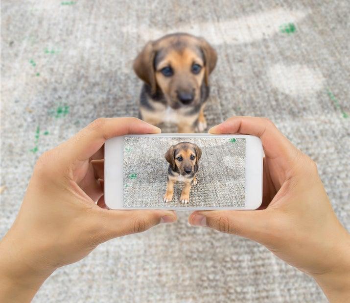 Atribuições: Posar para fotos e atuar em vídeos, aumentando o engajamento nas redes sociais do humano.Desvantagens: De vez em quando vem um pentelho dizer que você só posta foto de cachorro. Mas problema dele.