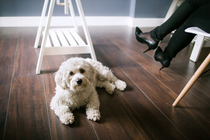 This super-furry breed is full of energy, but because of their small size, doesn't need a ton of room to move around. Only reaching a foot at the most, they make the perfect canine for a tight space.