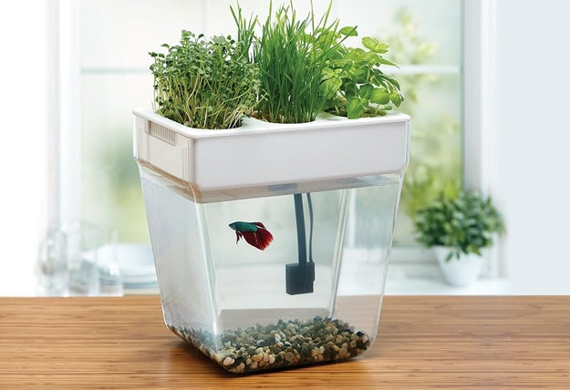 A garden fish tank that'll basically let you have your very own ecosystem.