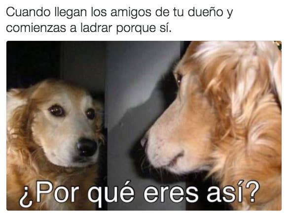 28 Memes De Perros Que Te Haran Derramar Lagrimas De Risa