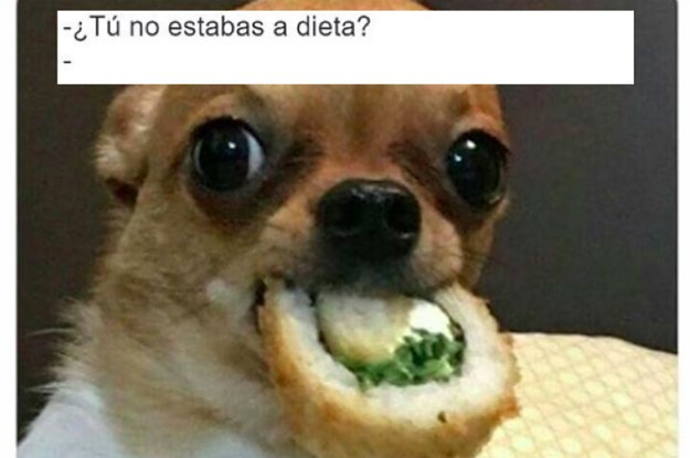 28 memes de perros que te haran derramar lagrimas 2 11319 1488570018 17_dblbig 28 memes de perros que te harán derramar lágrimas de risa