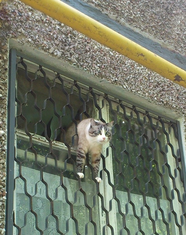 This cat in a not-so-great escape: