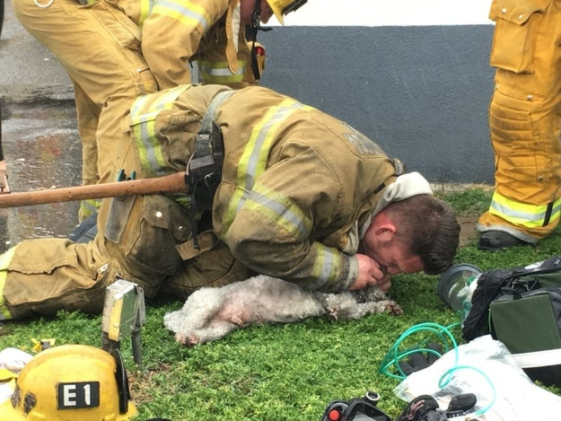 This fireman performing CPR on a dog that was caught in a fire.
