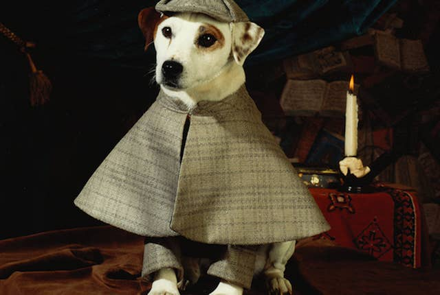 A more dapper dog has never existed.