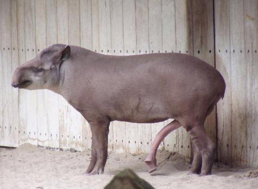maigre fille noire gicle