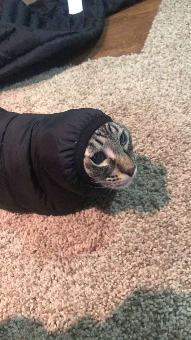This cat trapped in the sleeve of a jacket: