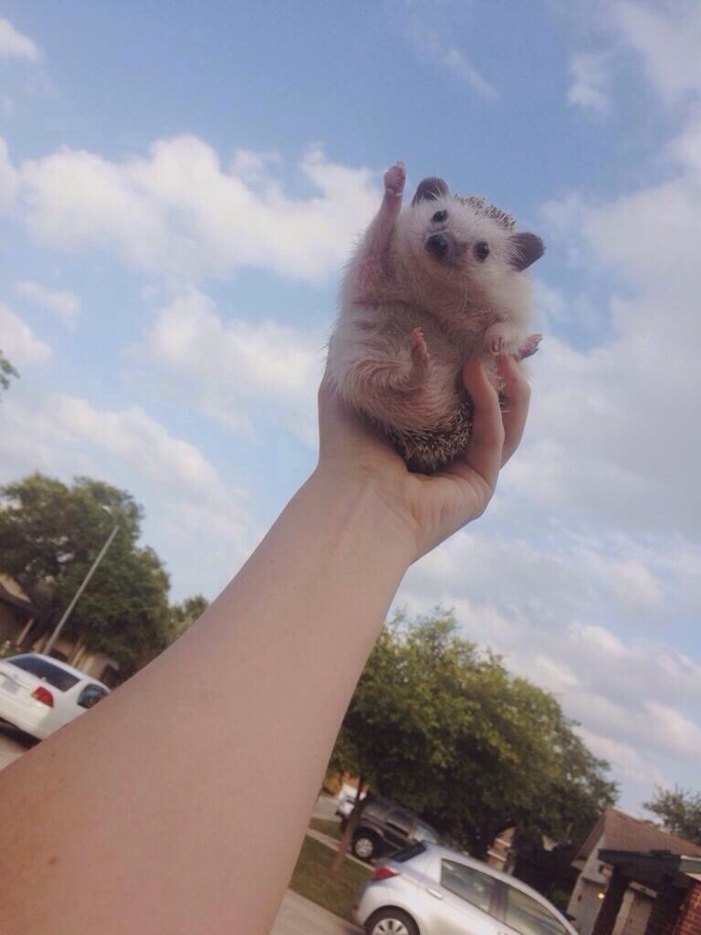 Literally Just 19 Pictures That Prove Hedgehogs Are Ridiculously Cute