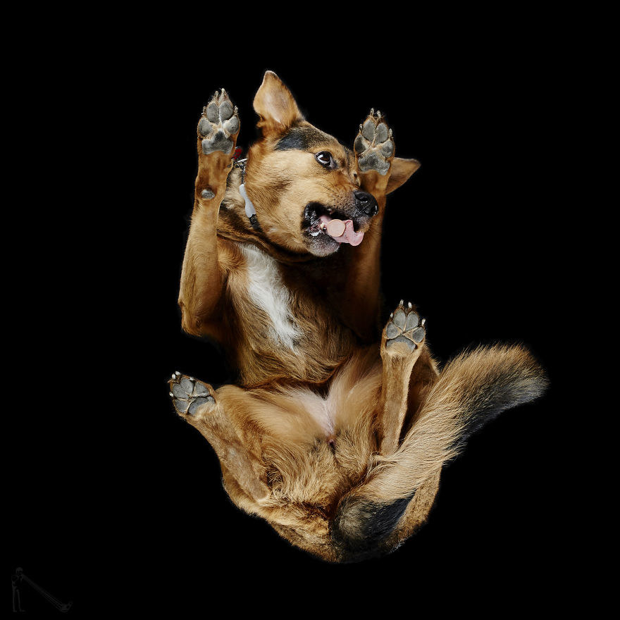21 Breathtaking Photos Of Dogs, But From Underneath