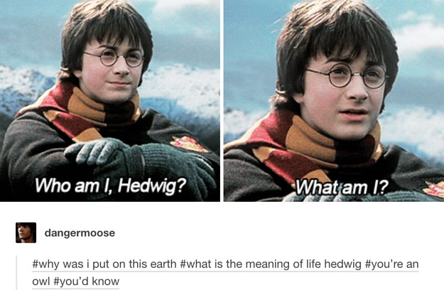 26 Hilarious Harry Potter Jokes That Say What We're All Thinking
