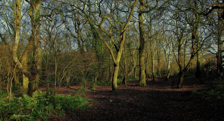 Stanney Woods Nature Reserve