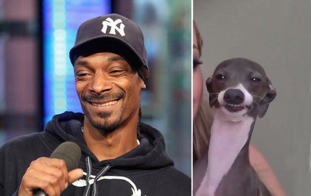 And Jenna Marbles' dog Kermit looks just like Snoop Dogg.