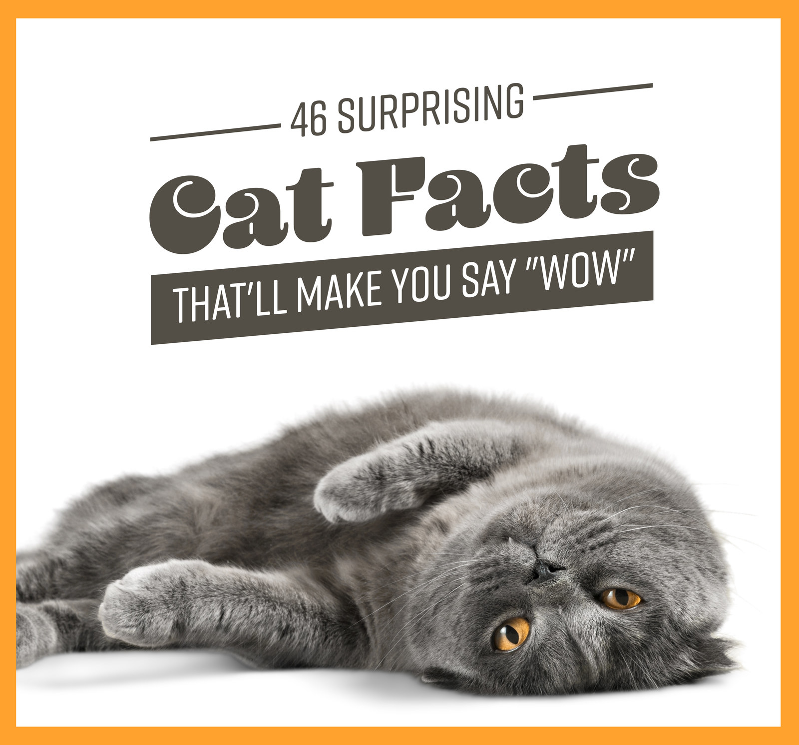 "46 Surprising Cat Facts That'll Make You Say ""Wow"""