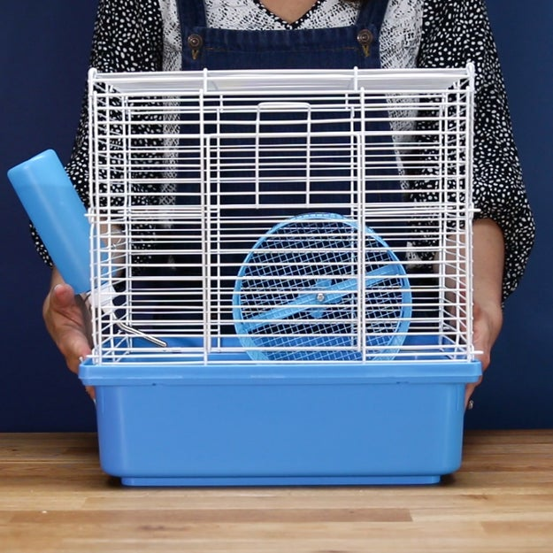 Set up the cage, food, water, and exercise toys before you bring the hamster home.