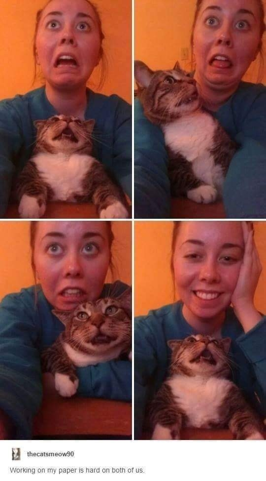 32 Cats Who Totally Outdid Themselves