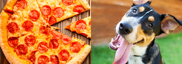 Answer Five Food Questions And We'll Reveal Your Fave Animal, Color, And Age