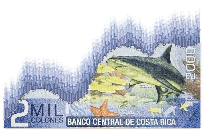 Бык акулы, морские звезды и другие морской жизни, размещенные на задней части 2000 колонов банкноте Коста-Рики. Валюта называется «колон» для Кристофер Коламбус, или «Кристобал Колон» на испанском языке.