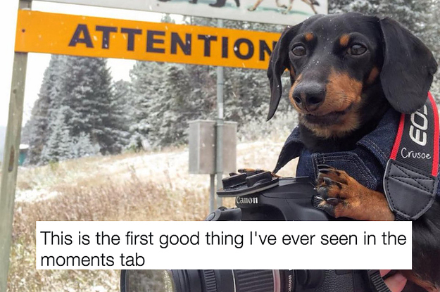 Image of: Doggo Buzzfeed 19 Tweets About Dogs That Are Funny Pure And Just So Goddamn True