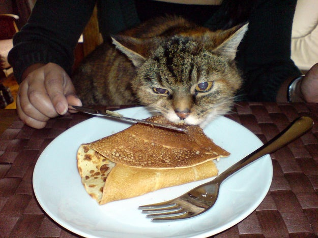 Your cat tries to eat your food all the time, and there are some things you have to hide from them.