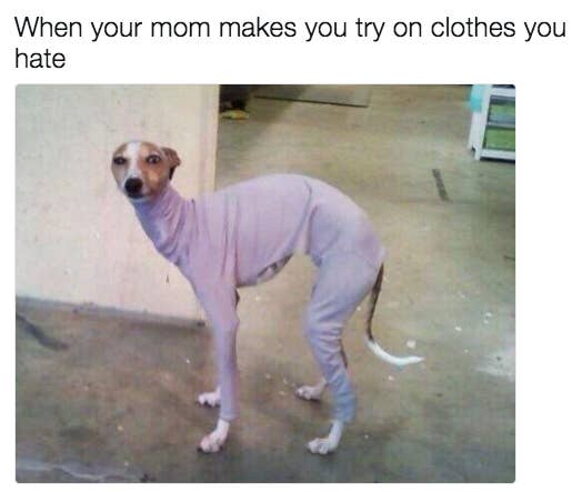 31 Memes To Send To Your Mom Right Now