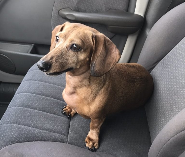 And this is her 7-year-old rescue dachshund, Sasha.