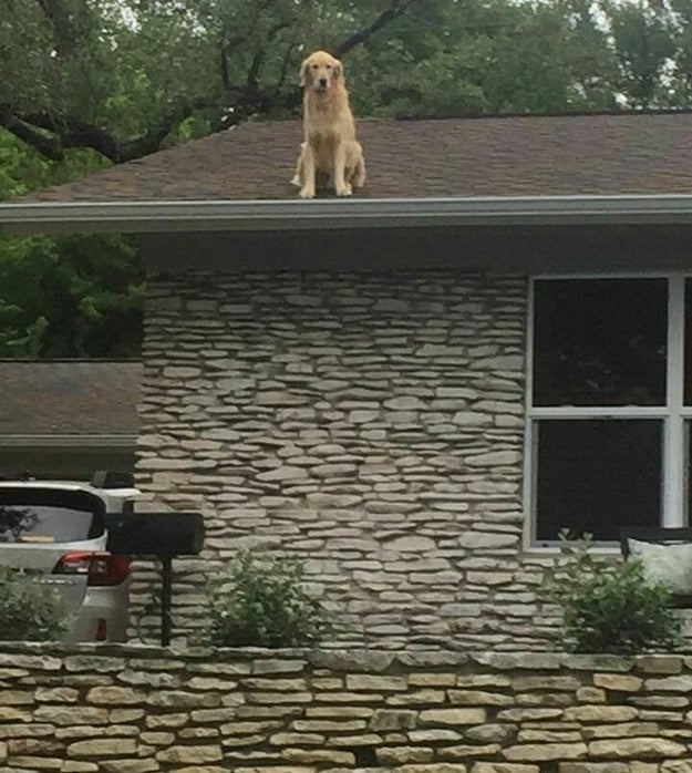 """""""Huck has what we call 'roof time' throughout the day,"""" Allie told BuzzFeed News."""
