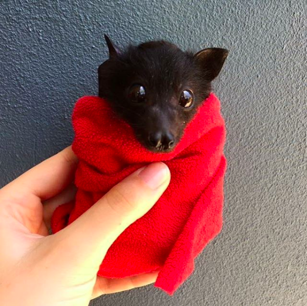But you can get past all of that for a little baby bat burrito, can't you?